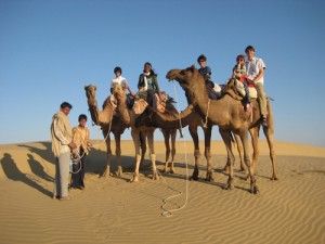 ...the camels...