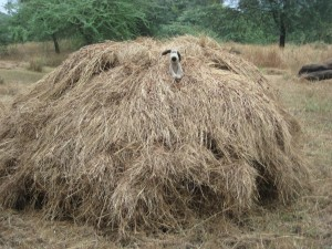 Gromit finds the hay that needs loading and starts barking out the orders
