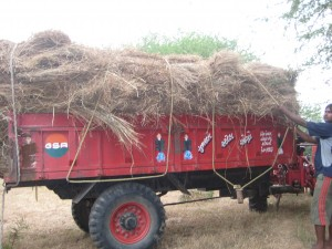 Finally we are fully loaded and the hay is tied to the trailer