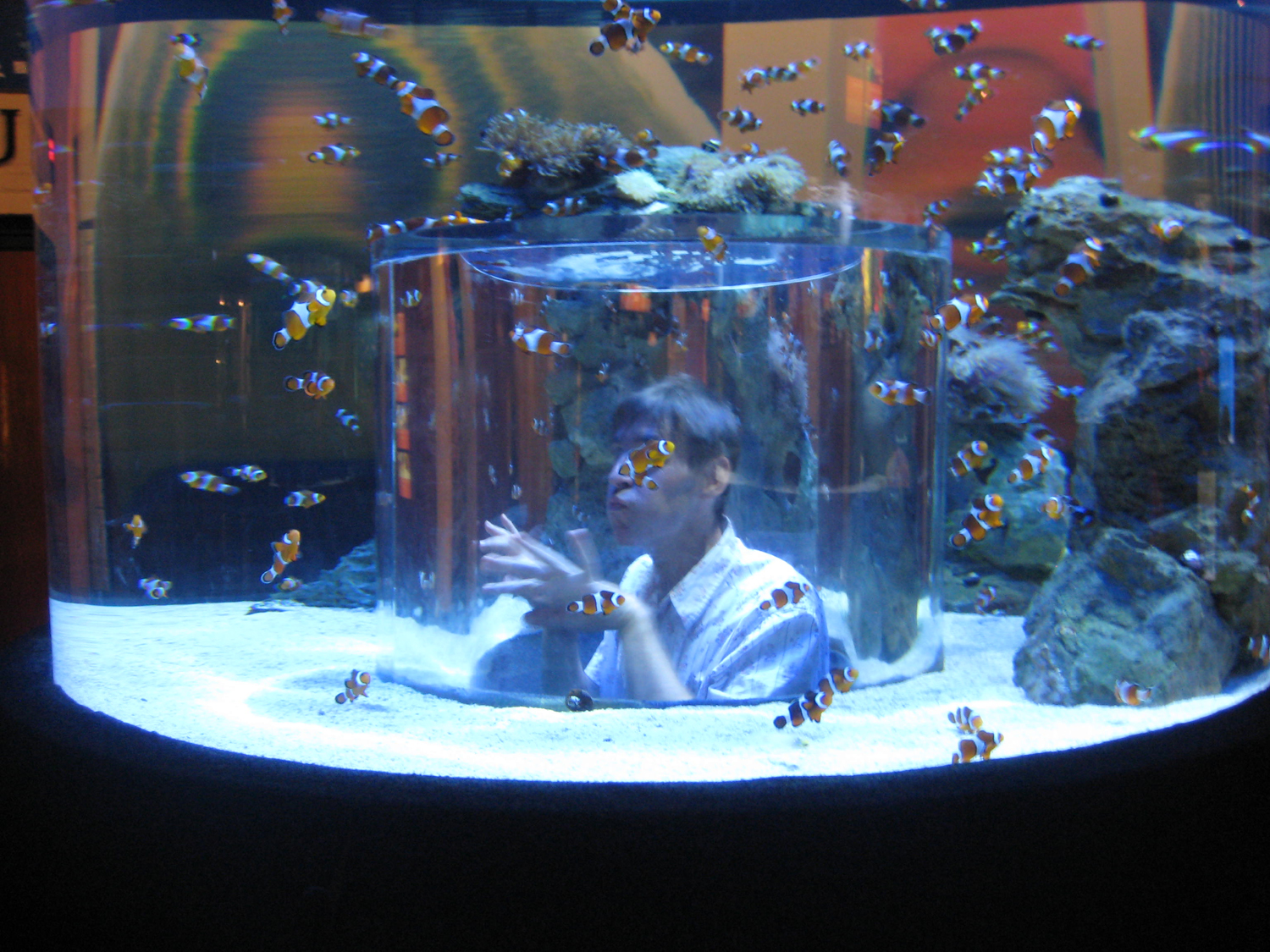 Freshwater aquarium fish cape town - After I Had Dried Off And Been Thrown Out Of The Aquarium We Set Off For Table Mountain Hoping To Get Up There For Sunset The Sky Was Still Clear And The